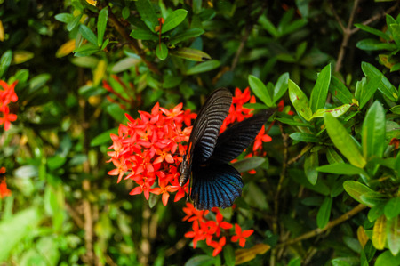 Big Tropical Butterfly in the Green Wilderness