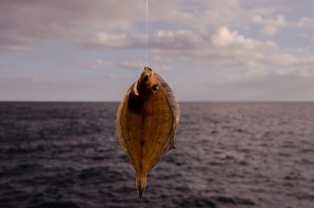 sole: Whole Single Fresh Sole Fish Near The Ocean