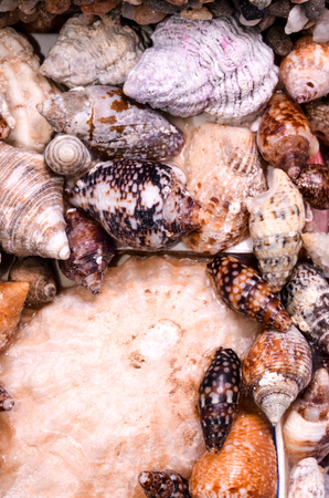 cockles: Texture Background of colored round sea shells