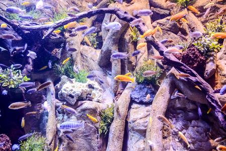 tropical acquarium: Photo Picture an Acquarium Full of Beautiful Tropical Fishes