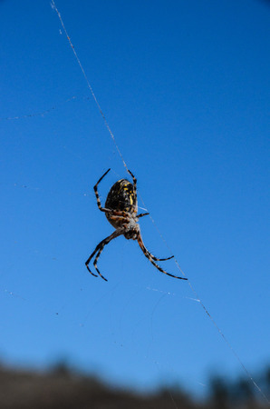 Big Insect Spider and Web into the Wild Stock Photo