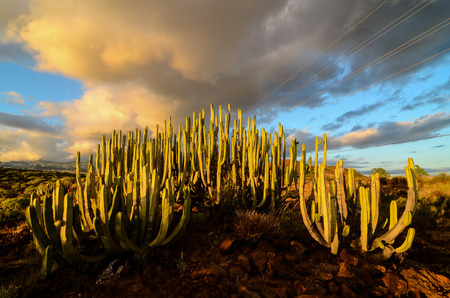Calm Cactus Desert Sunset in Tenerife Canary Island