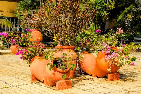 Terracotta Vases with Plants on an Urban Garden