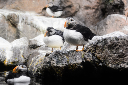 Picture of Wild Penguin Animal Bird Playing Stock Photo