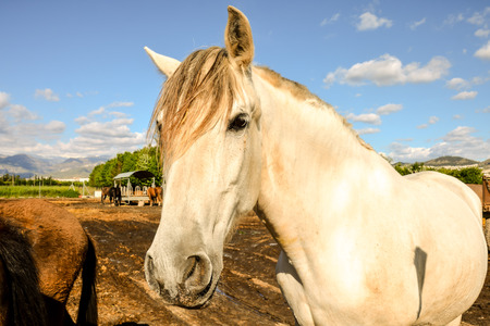 jackass: Photo picture of beautiful Horse on a farm