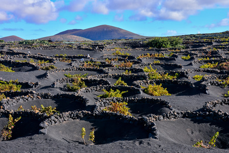 Spanish View Landscape in Lanzarote Tropical Volcanic Canary Islands Spain Typical Vineyard