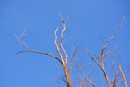 Photo Picture of Single old and dead tree branch Stock Photo