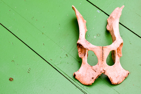 Photo Picture of the Dry Goat Skull Bone Stock Photo