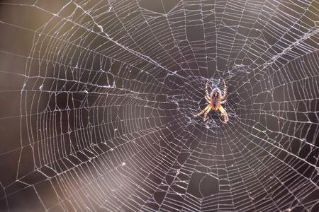 Photo Foto van een spin en zijn Web