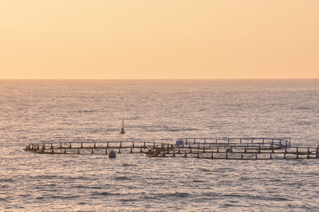 commercial fisheries: Fish Farm in the Atlantic Ocean at Sunset Stock Photo