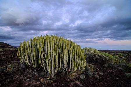 sonora: Calm Cactus Desert Sunset in Tenerife Canary Island