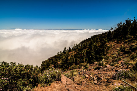 pinecones: High Clouds over Pine Cone Trees Forest in Tenerife Island Stock Photo