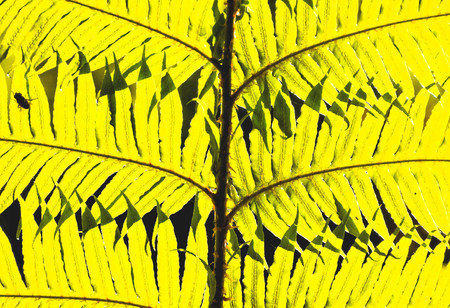 Photo Picture of Leaf Background Texture Pattern