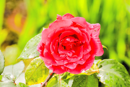 Photo Picture of Beautiful Blooming Flower Background Stock Photo