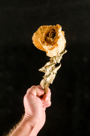 a dried rose isolated on a black background