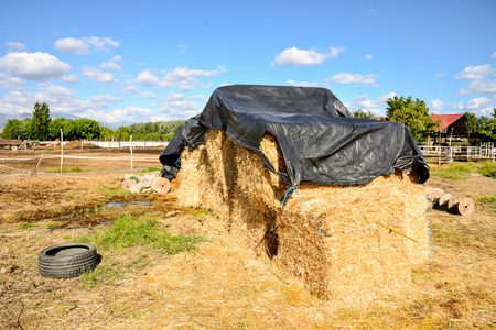 Photo picture Autumn rural landscape with hay bale, and farm Imagens