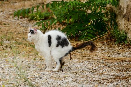 cat taking a dump crap shit poop shitting cat Banque d'images