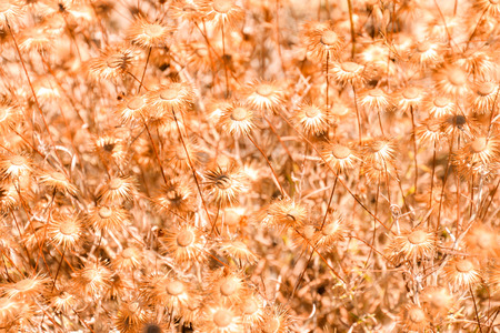Photo Picture of Beautiful dry Flower Background