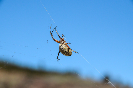 Big Insect Spider and Web into the Wild 写真素材