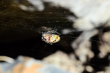 Big Insect Spider and Web into the Wild 스톡 콘텐츠