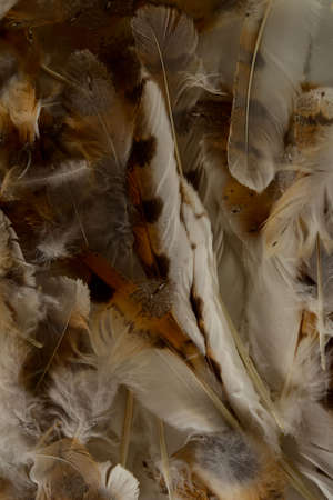 Close-up of feather plume background texture Object on a White Background 写真素材