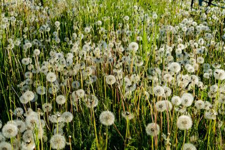 flowers in the garden, in cinque terre, Liguria Stock Photo