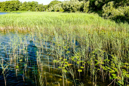 grass and lake, beautiful photo digital picture