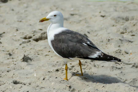 seagull on beach, beautiful photo digital picture Imagens