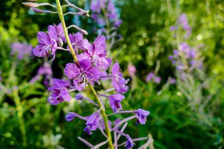 purple flowers in the garden, beautiful photo digital picture Imagens