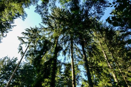 árboles en el bosque, hermosa foto foto digital