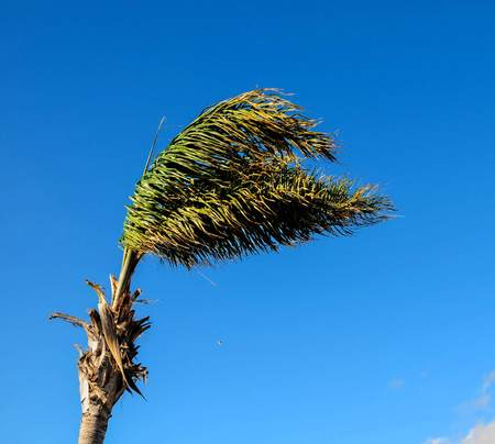 branch of palm tree on background of blue sky