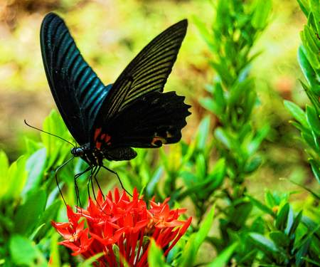 butterfly on flower, beautiful photo digital picture Banco de Imagens