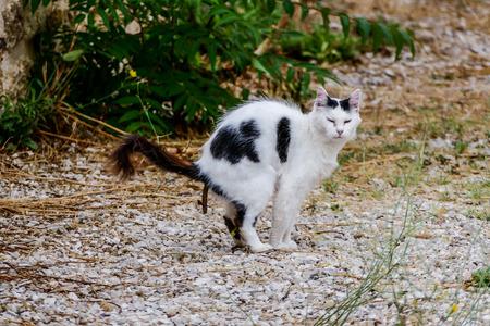 cat taking a dump crap shit poop shitting cat