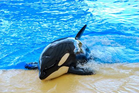 dolphin in water, beautiful photo digital picture Reklamní fotografie