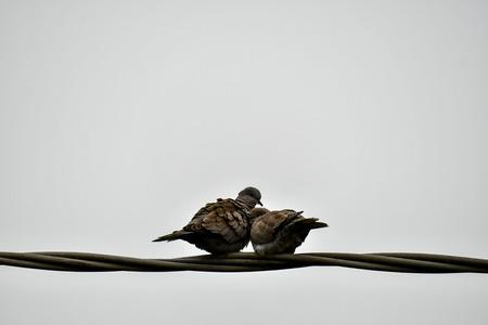 bird in flight, beautiful photo digital picture 스톡 콘텐츠