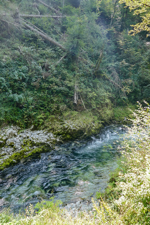 river in the forest, beautiful photo digital picture 免版税图像