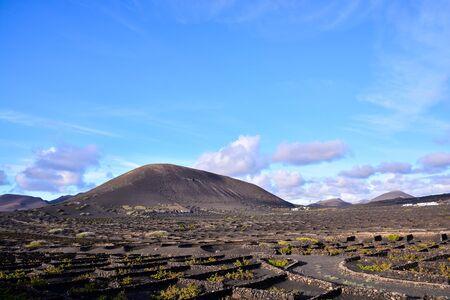 Spanish View Vineyard Landscape in Lanzarote La Geria Tropical Volcanic Canary Islands Spain
