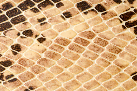 Photo of Snake skin pattern background texture