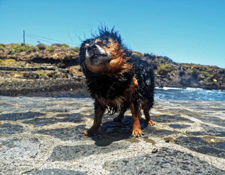 Wet Black Dog near a Beach on The Atlantic Ocean