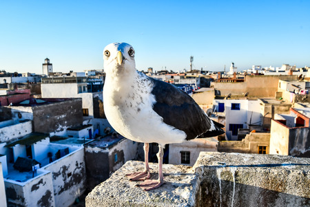 seagull on post, beautiful photo digital picture Stock Photo
