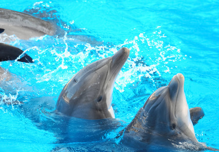 Funny Dolphins Swimming on a very Blue Water