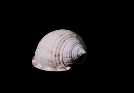 Sea Shell Isolated On A Black background 免版税图像