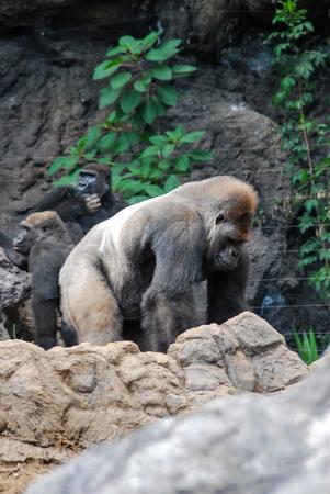 bear in zoo, beautiful photo digital picture Standard-Bild - 119662369