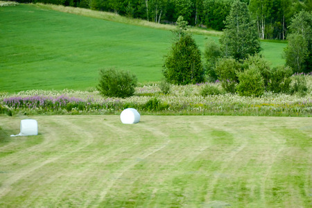 golf ball on the course, beautiful photo digital picture