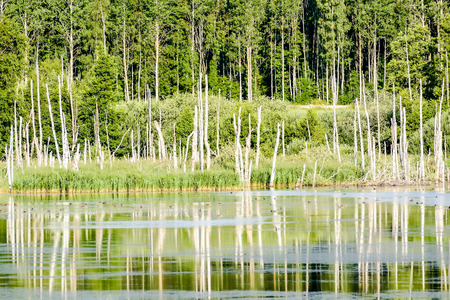 lake in the forest, beautiful photo digital picture Stok Fotoğraf - 121049953