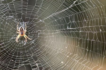 Photo Image d'une araignée et de sa toile Banque d'images