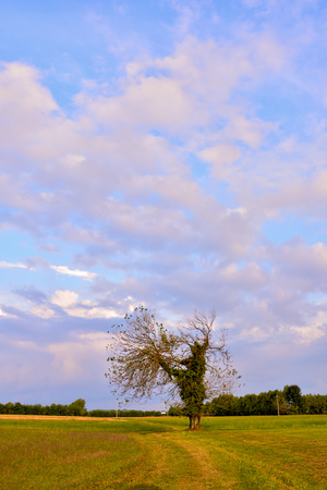 Photo Picture of a single big tree in meadow Archivio Fotografico