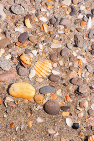 Photo picture texture sea shells and rocks on sand background