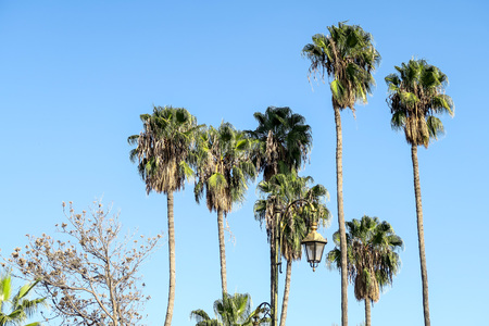 palm trees and blue sky, beautiful photo digital picture