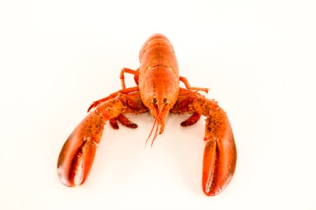 Photo picture of a delicious freshly steamed lobster